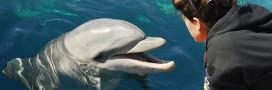 Le public est responsable du bonheur des dauphins