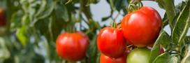 Les 12 raisons de devenir 'jardinovore' selon Jenny Gloster