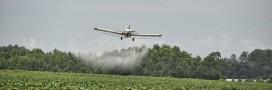 Selon l'agence européenne de santé, le glyphosate ne serait pas cancérigène
