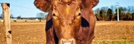 Cowspiracy, le documentaire choc qui dénonce l'impact de la viande