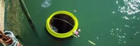 'The Seabin Project': une poubelle écologique pour nettoyer les océans