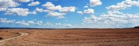 Sols: l'agroforesterie, la révolution urgente à mener