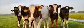 La Chine veut ouvrir une usine de clonage animal géante