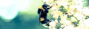 abeilles-pesticides-toxiques-ban