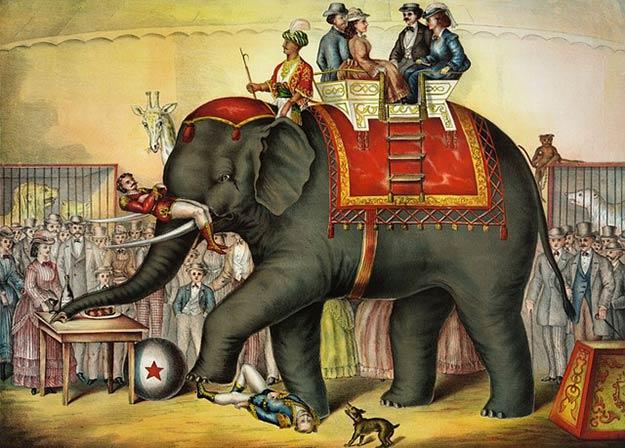 animaux-de-cirque