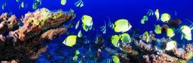 Biodiversité: les citoyens appelés à co-rédiger le texte de loi