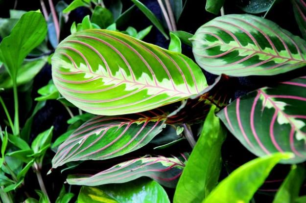 plantes vertes janvier