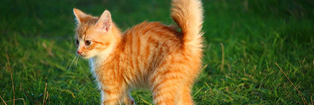 nourrir-son-chat