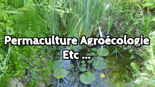 permaculture-agroecologie-agriculture