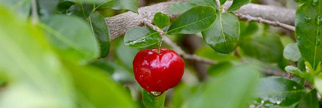 Plantes et épices : les meilleurs pour bien traverser les frimas
