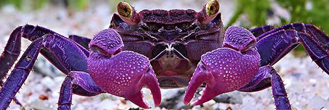 11 espèces animales émerveillantes découvertes en 2015