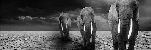 Le commerce de défenses de mammouths freinera-t-il le massacre des éléphants ?