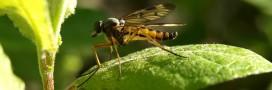 Le virus Zika ne serait pas la cause des microcéphalies au Brésil