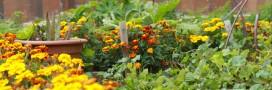 Jardins suspendus: des jardins dans la ville