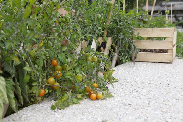 jardins-suspendus-potager