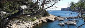 Pêche et biodiversité en danger en Méditerranée, MSC et WWF se mobilisent