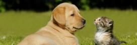 Pour les scientifiques, les chiens aiment plus les humains que les chats