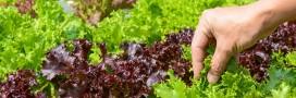 Au Canada, on peut cueillir ses légumes au supermarché