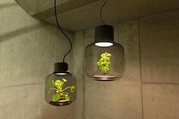 lampe-plantes-1