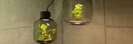 Mygdal PlantLight: des lampes qui font pousser des plantes sans eau et sans lumière naturelle