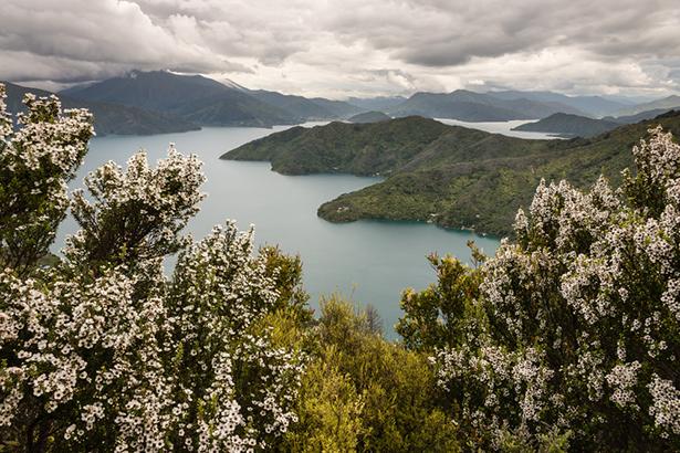 miel manuka Noubelle-Zélande