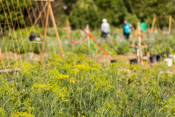 48h agriculture urbaine jardinage
