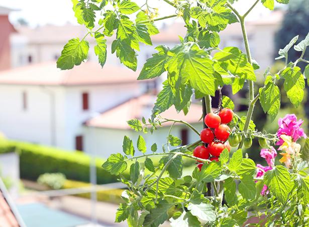 48h de l'agriculture urbaine végétalisation des villes