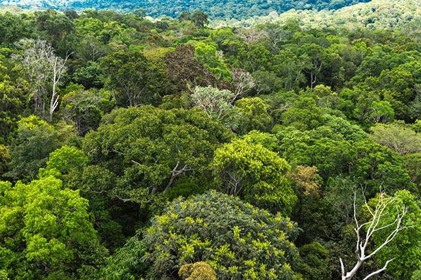 EEncyclopédie médecine traditionnelle Amazonie