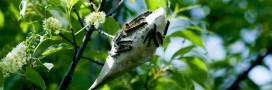 Intelligence des plantes: que disent-elles quand elles parlent entre elles?