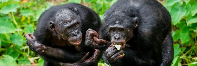 Le moine et le bonobo : d'où vient l'altruisme chez l'homme ?