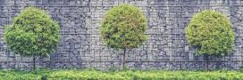 'J'apprends à tailler mes arbres': le livre indispensable pour les jardiniers