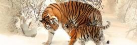 10 espèces menacées de disparaître en 2016