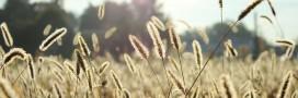 Allergie au pollen: diminuez les symptômes avec la réflexologie 3D
