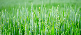 OGM : où en est-on ?