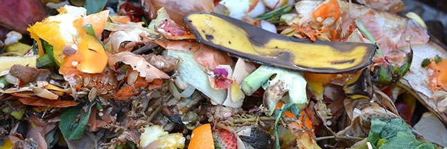 Ces 'déchets alimentaires' que l'on pourrait manger