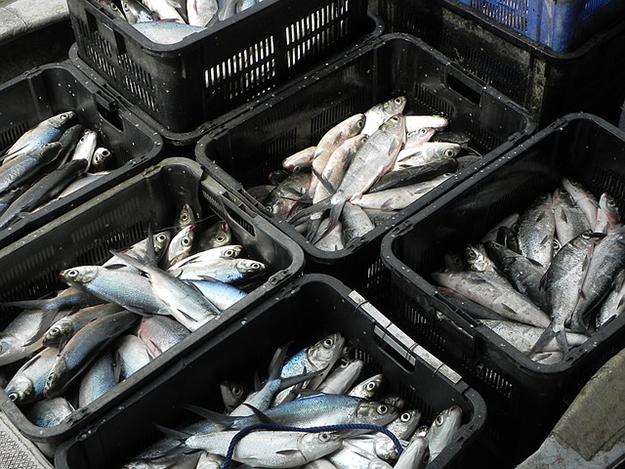 fish-1269891_640-amap-poisson-bois-culture