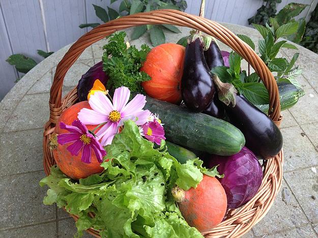 harvest-1225593_640-amap-poisson-bois-culture