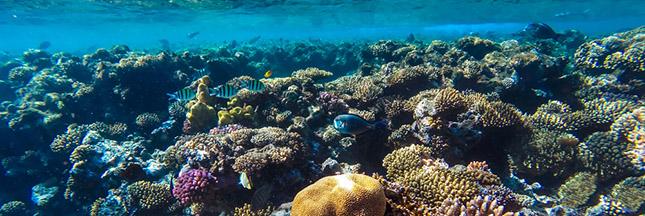 Découverte insolite d'un récif corallien de 1.000 km au Brésil