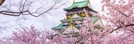 'Ohanami' ou comment le Japon célèbre la floraison des sakura