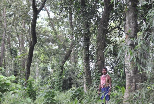 Jadav Payeng Forest Man