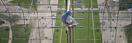 Biodiversité en Île-de-France: oiseaux et papillons en déclin