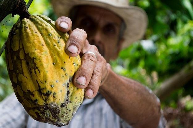 cacao producteur commerce équitable