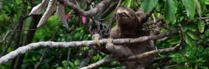 forêt biodiversité paresseux