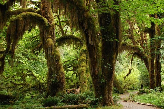 biodiversité forêt