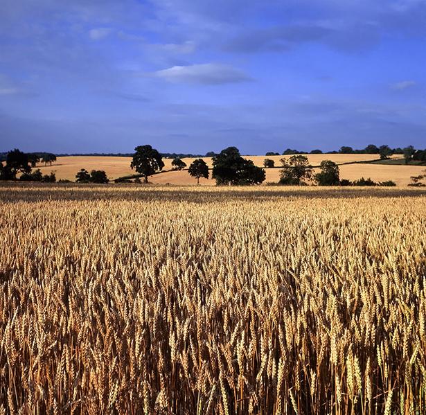 PAC institution européenne agricole