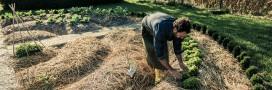 Permaculture ou agriculture naturelle: l'avis d'un agronome