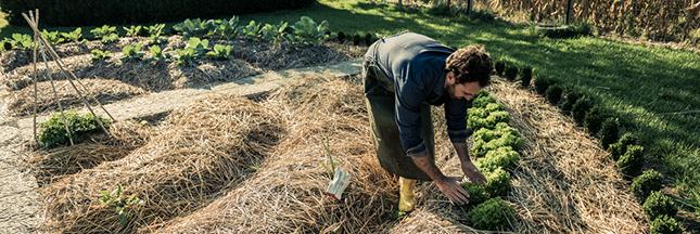 Permaculture ou agriculture naturelle : l'avis d'un agronome