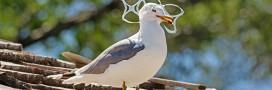 Saltwater: des emballages que les animaux marins peuvent manger