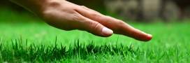 Jardin bio: quelle tondeuse écolo pour mon jardin?