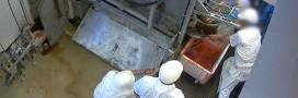 Scandale dans les abattoirs : une nouvelle vidéo choc sur la maltraitance animale